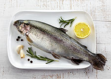 Fresh trout Stock Images