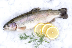 Fresh trout. With lemons and dill royalty free stock photos