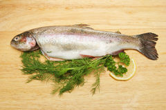 Fresh Trout On A Board With Herbs Royalty Free Stock Image