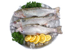Fresh trout on plate with ice Stock Photo