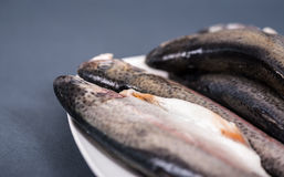 Fresh trout on a plate. Several pieces of fresh trout on plate on a gray background Royalty Free Stock Photos