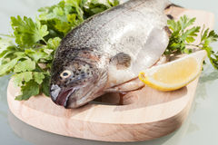 Fresh trout. Prepared for cooking Royalty Free Stock Image