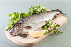 Fresh trout. Prepared for cooking Royalty Free Stock Photo