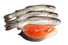 Fresh trout and salmon steak Royalty Free Stock Image