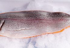 Fresh Trout side lying on ice Stock Image