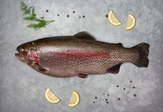 Fresh trout. Slices of lemon, dill on a gray stone background royalty free stock photo