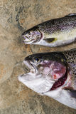 Fresh Trout on Stone Royalty Free Stock Photos