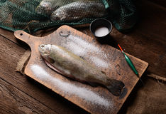 Fresh trout Royalty Free Stock Photography
