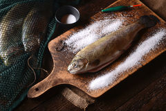 Fresh trout Royalty Free Stock Image
