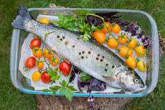 Fresh trout with vegetables Stock Photos