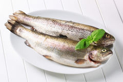 Fresh trouts Stock Photo