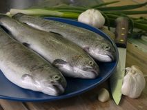 Fresh trouts Royalty Free Stock Photo