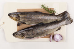 Fresh trouts from above. Stock Photography