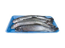 Fresh trouts on blue tray. Isolated. Stock Photos