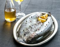 Fresh trouts in ice on the vintage metal tray Stock Photos