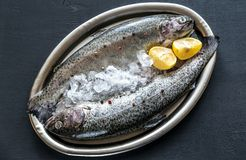 Fresh trouts in ice on the vintage metal tray Royalty Free Stock Images