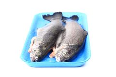 Fresh trouts Royalty Free Stock Image