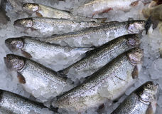 Fresh Trouts in the Market Royalty Free Stock Photography