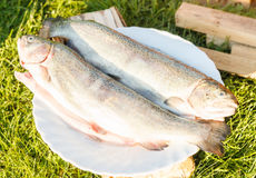 Fresh trouts on plate Stock Photography