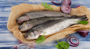 Fresh trouts with spices and seasonings Stock Images