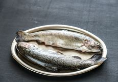 Fresh trouts on the vintage metal tray Stock Images