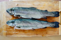 Fresh trouts Stock Image