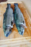 Fresh trouts Stock Photos