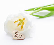Fresh tulip flower and decorative heart from wood Royalty Free Stock Photos