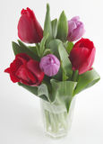 Fresh tulips Stock Images