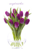 Fresh tulips royalty free stock photos