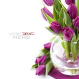 Fresh tulips stock photo