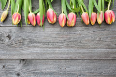 Fresh tulips arranged on old wooden backgroun Royalty Free Stock Photography