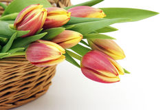 Fresh tulips in a basket Stock Photo