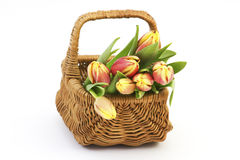Fresh tulips in a basket Stock Photos