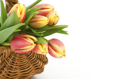 Fresh tulips in a basket Stock Photography