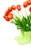 Fresh tulips in boots Royalty Free Stock Image