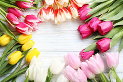 Fresh tulips Royalty Free Stock Photography