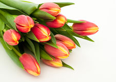 Fresh tulips. Bunch of fresh pink tulips isolated on white background Stock Photography