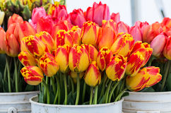 Fresh tulips on display Royalty Free Stock Photos
