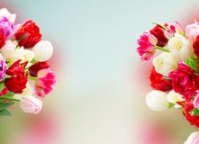 Fresh tulips flowers stock photography