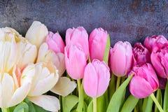 Fresh tulips on gray background Royalty Free Stock Photos