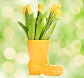 Fresh Tulips In Yellow Vase Stock Images