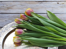 Fresh tulips on a metal tray. Red and yellow colored tulips on a metal tray stock photography