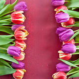 Fresh tulips on red Stock Images
