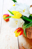 Fresh tulips, spring flowers Royalty Free Stock Images