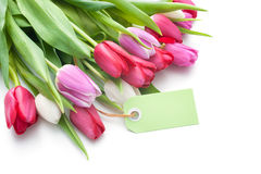 Fresh tulips and tag with copy space Stock Photography