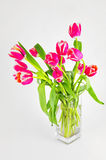Fresh tulips in vase Royalty Free Stock Images