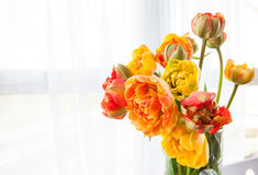 Fresh tulips in a vase Stock Photo