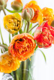 Fresh tulips in a vase Stock Images