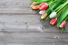 Fresh tulips on wooden background Stock Image